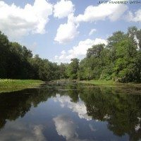 Beautiful Reflections of Withlacoochee River