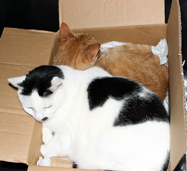 boxcats