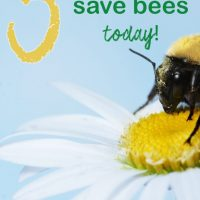 5 Ways To Help Save Bees Today & Reasons You'll Want to!