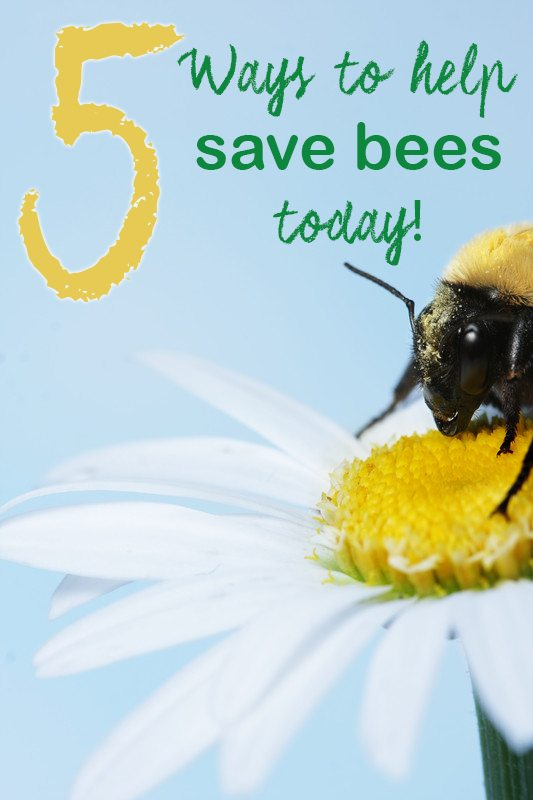5 everyday ideas on how to save bees and the reasons you'll want to help. #beefriendlier