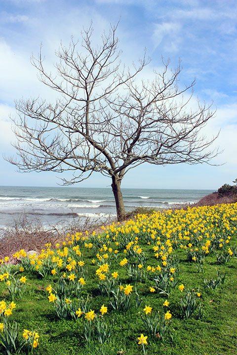 Newport Cliff Walk in May
