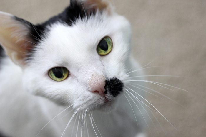 5 Ways Having a Pet Makes Me Better. Find out how to help when you buy Purina Cat Chow.