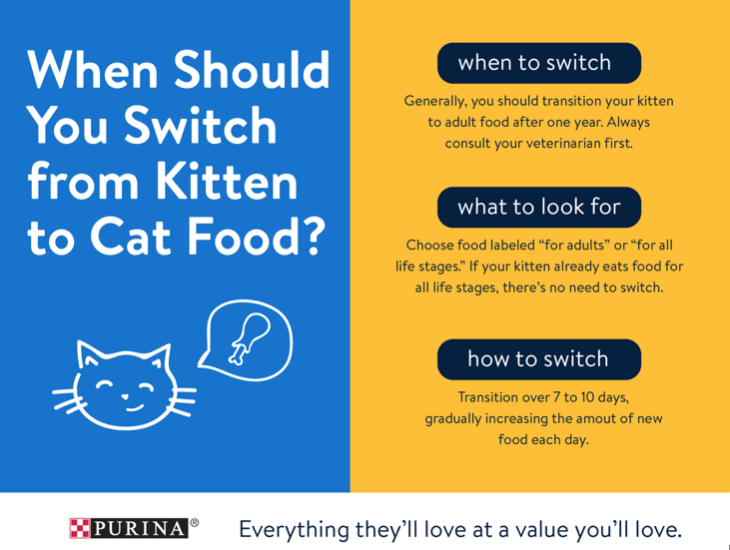 When to feel kittens adult food