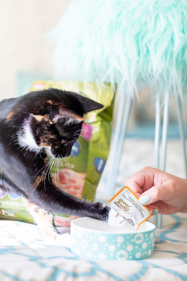 See how I learned to bond with my new adopted kitties.