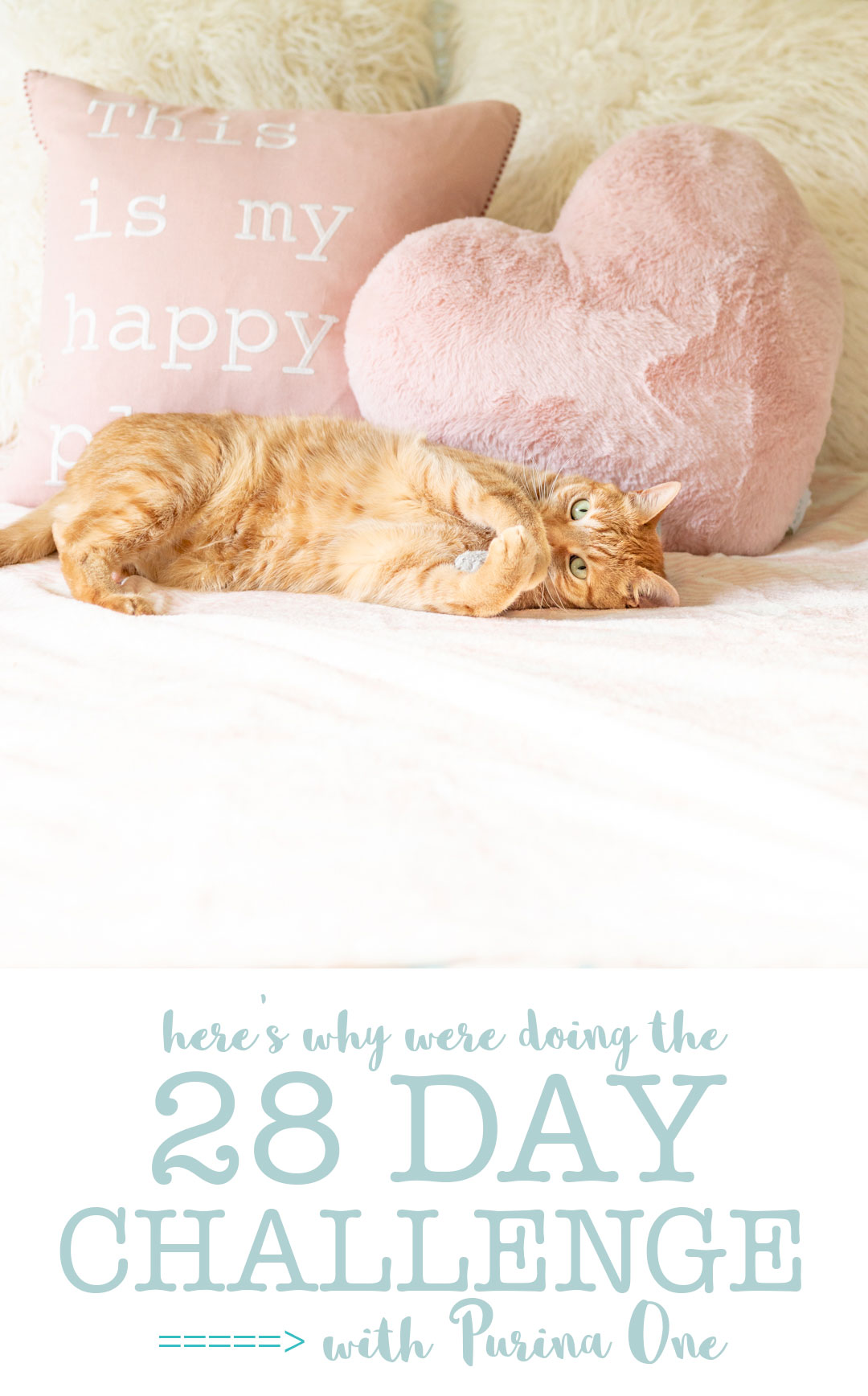 Here's what you need to know about the Purina One 28 Day Challenge for cats.